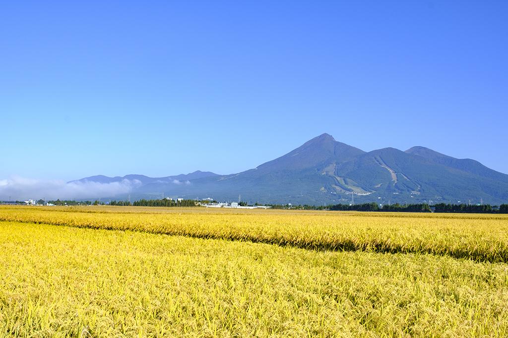 No.17824 磐梯山(稲穂)